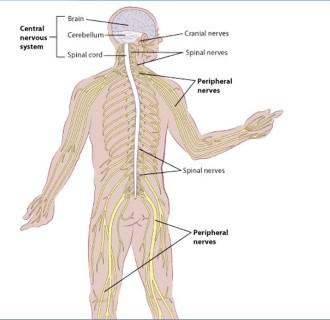 Gerinc és idegrendszeri daganatok