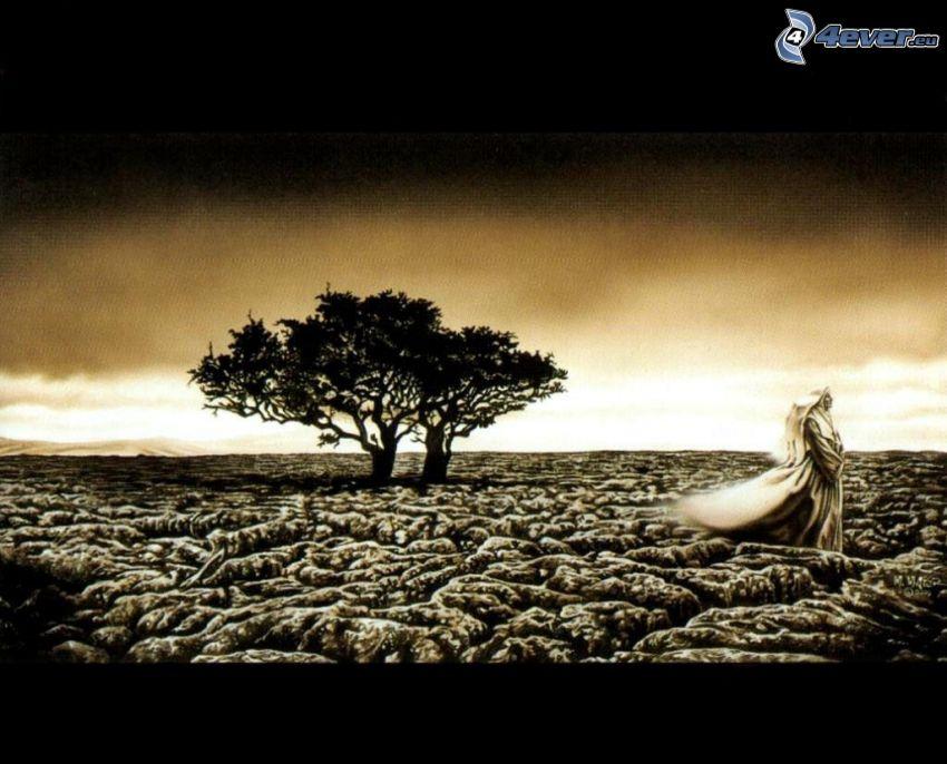 Kép magányos tölgy fa