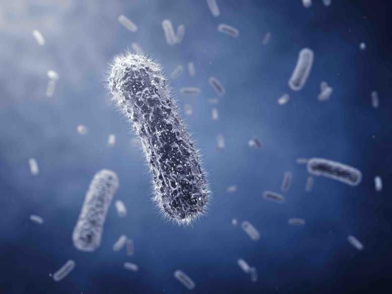 mit jelent a dysbiosis