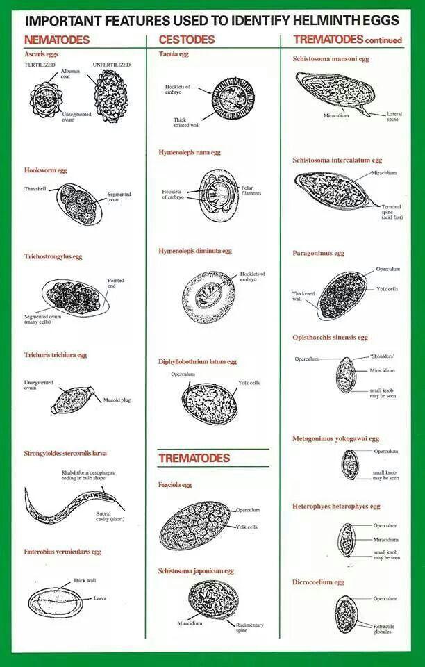 helmint fertőzések emedicin parazita gyógyszer emberek számára