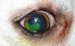 a ló papillomatosisának kezelése féreghajtó gyógyszer az emberek véleményére