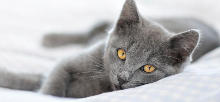 simptom de giardien bei katzen)