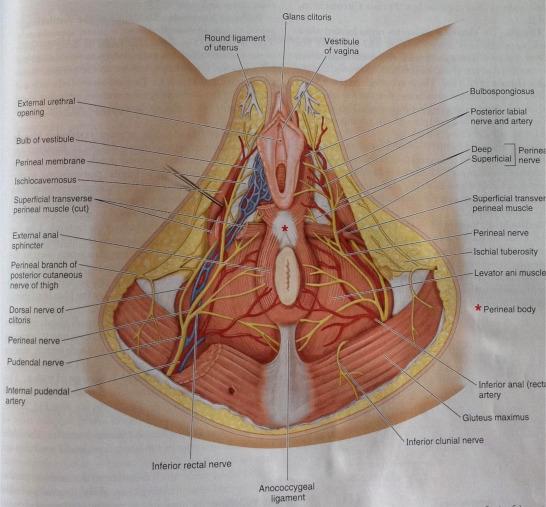Égő vizelés & Epizodikus szemfájdalom & Humán papillomavírus: okok – Symptoma