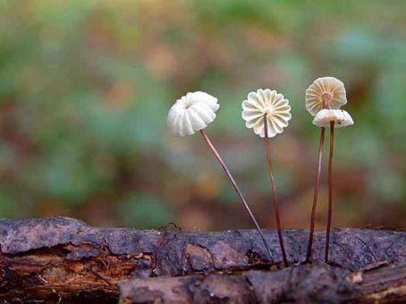 A mérgező diófa alatt is van élet: mutatjuk, miket ültethetsz alá