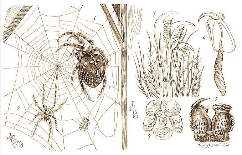 szemölcsöket talált a hüvelyében paraziták az élelmiszerellátásban