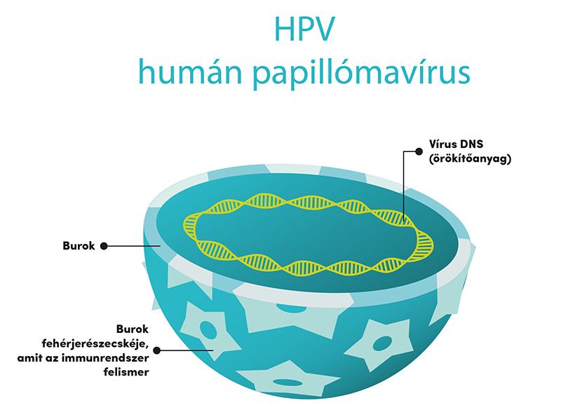 vírus emberi papillomavírust okoz