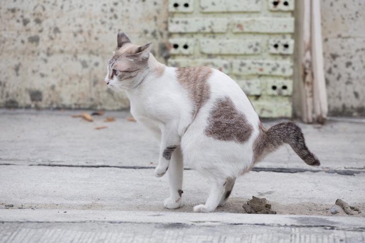 Kölyök- vagy felnőtt macskája védett-e a galandférgekkel szemben?