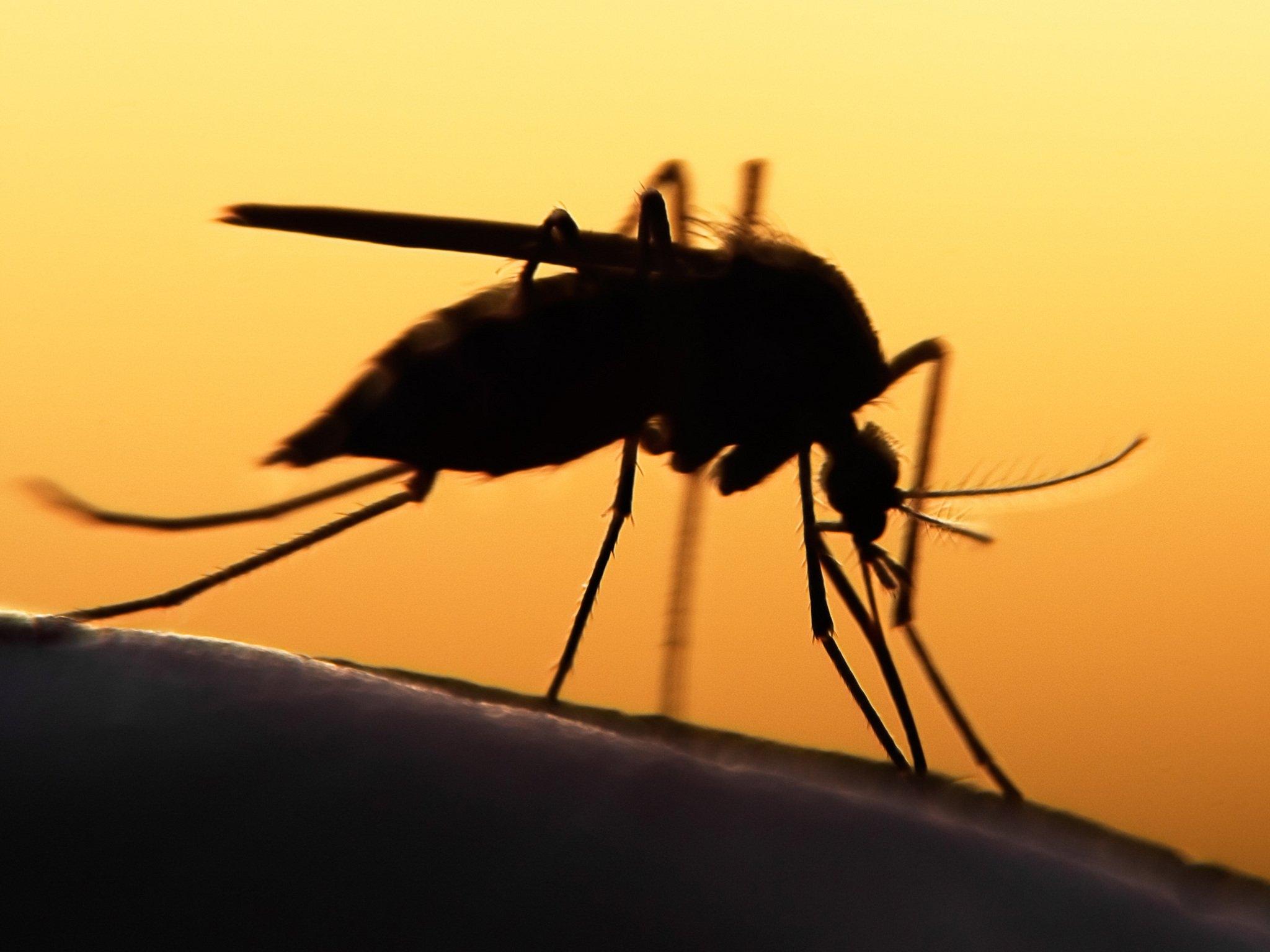 szűri a paraziták elleni szektort