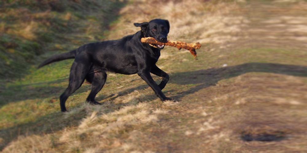 Panacur giardia hond, Category: DEFAULT