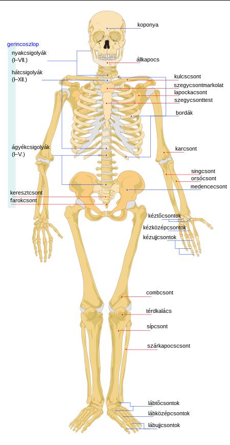 emberi papillomavírus a lábakban
