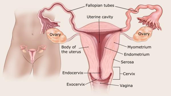 a nyirokcsomók endometrium rákja oua helminti