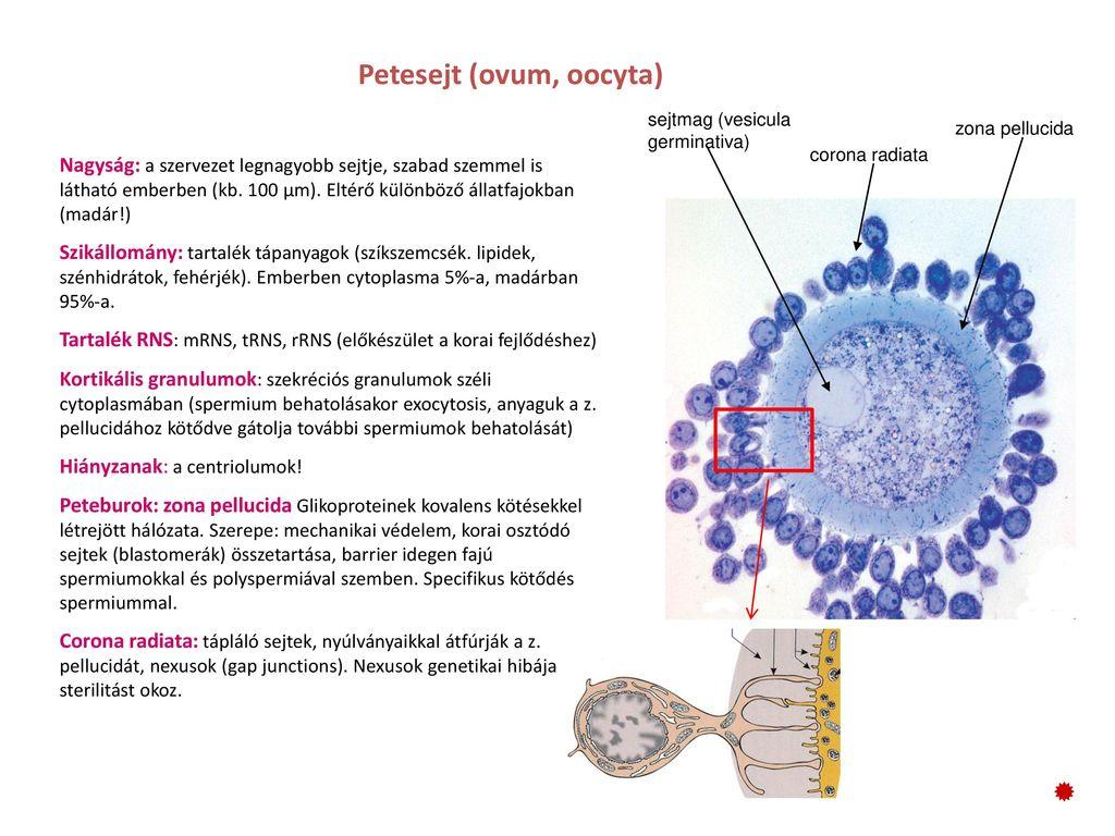 Neuroendokrin rákhírek - Legfrissebb hírek a rák kezeléséről