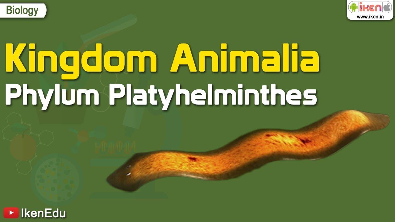 reprodukciós platyhelminthes