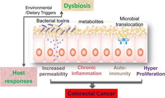dysbiosis gyógyulás
