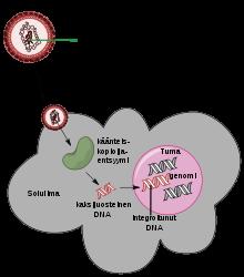 a papilloma vírus inkubációs ideje