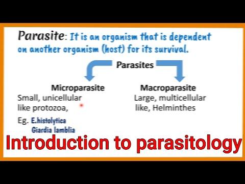 protozoon paraziták de l homme