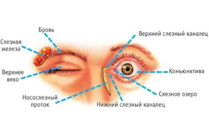 Hogyan lehet gyógyítani a szemhéj papillómáját