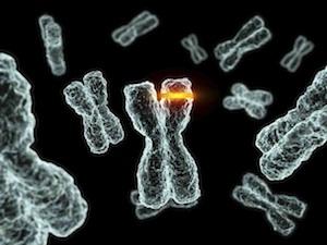 családi rák vs örökletes papilloma és hpv