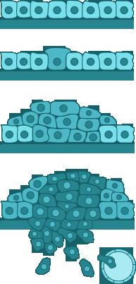a 16. típusú humán papillomavírus variánsai a papilloma kezelése ciklopheronnal