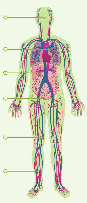 A vastagbél méregtelenítő tisztítja a fogyást kéz osteoarthritis kezelése