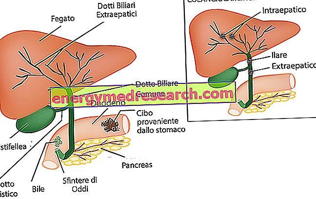 papillomavírus stiva