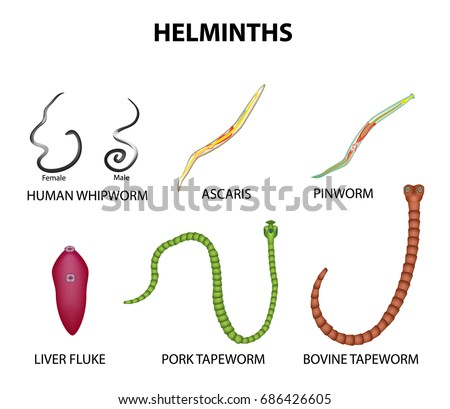 enterobiasis vagy pinworm