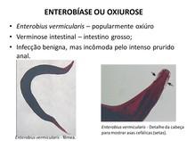 enterobius vermicularis megtalálható a vizeletben sushi férgek, mint kezelni