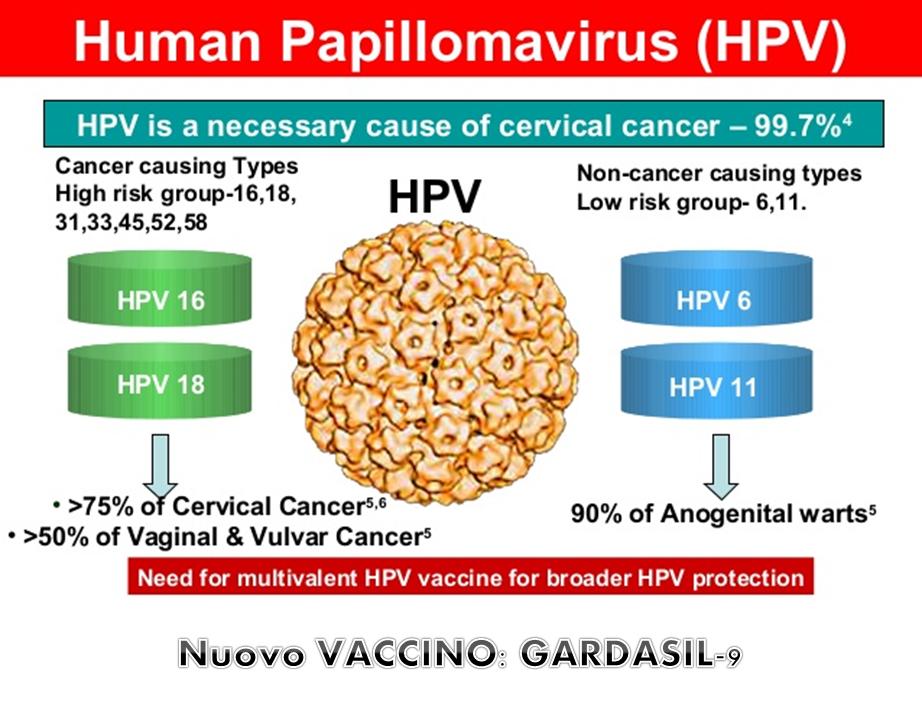 humán papillomavírus hpv 16)