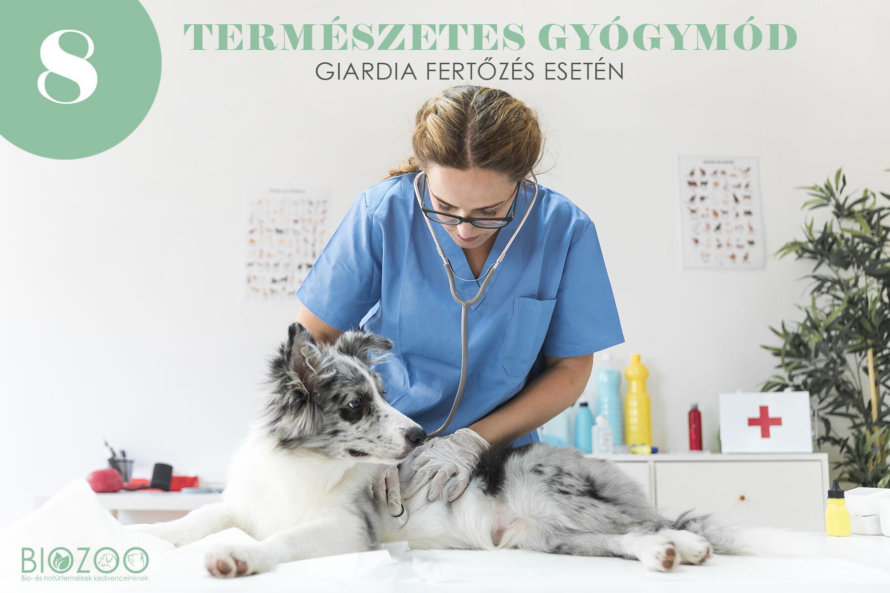 Hogyan óvja meg kutyáját a giardiafertőzéstől?