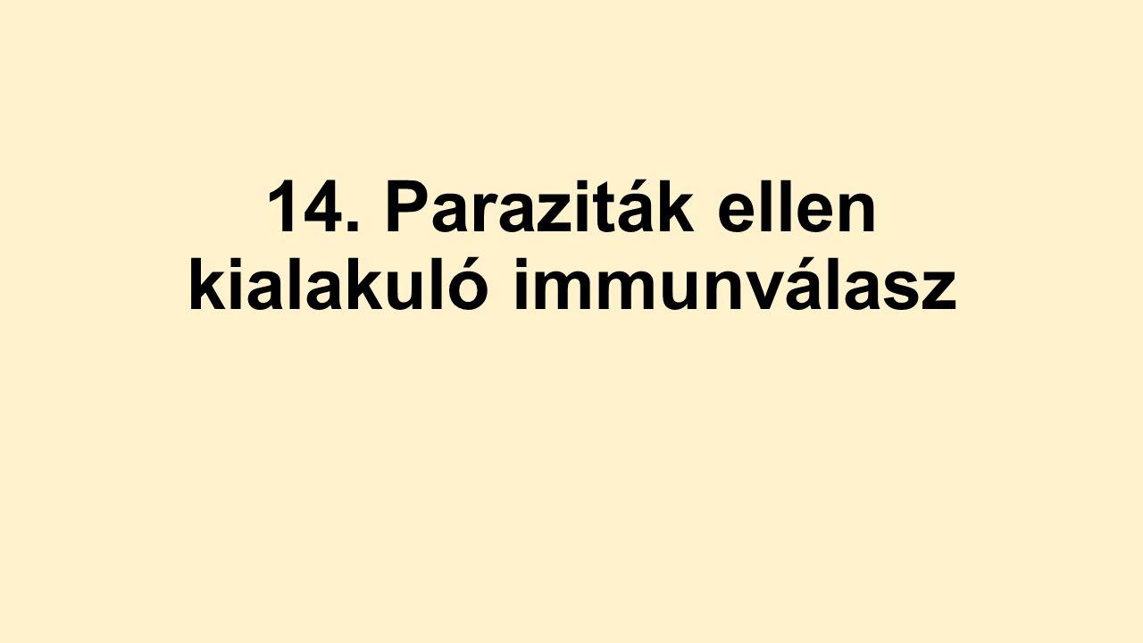 Immunválasz a parazitáknak ppt, Paraziták elleni immunválasz ppt. Navigációs menü
