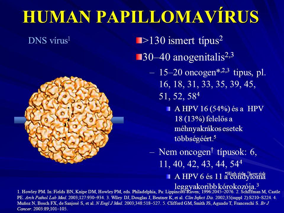 kimutatási papilloma vírus papilloma tumor a hólyagban