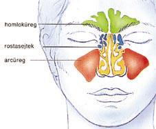 Orr rosszindulatú daganata - Daganatos megbetegedések