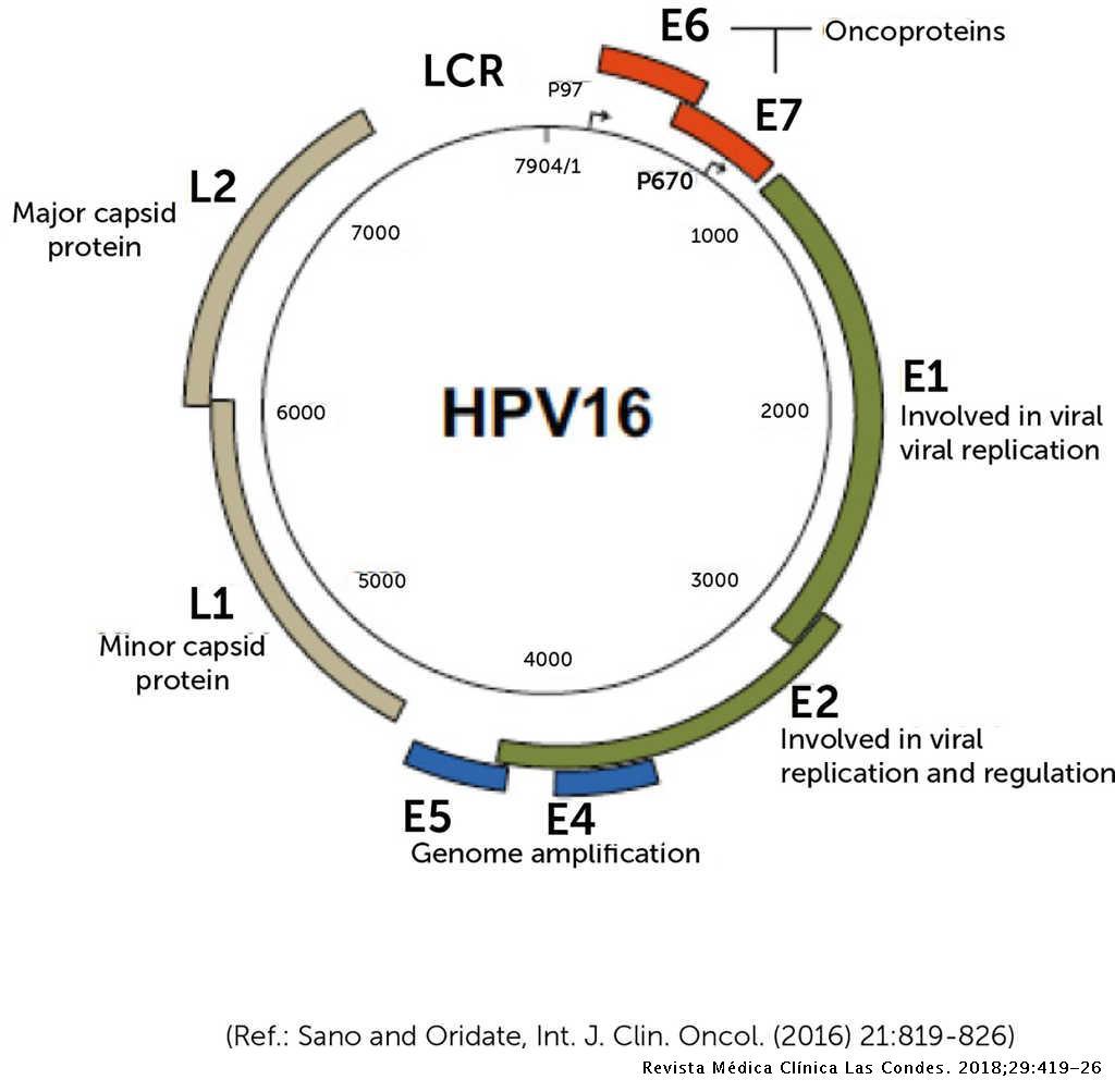 papillomavírus vph 16