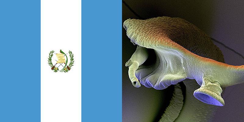 schistosomiasis guatemala torony mágikus torony
