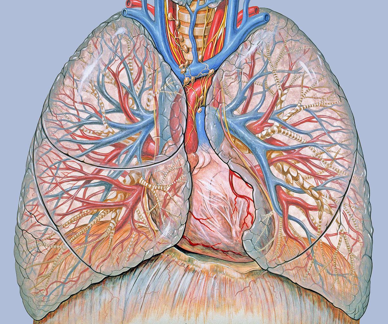 papillomatosis tüdőrák