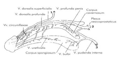 urethralis condyloma kezelése