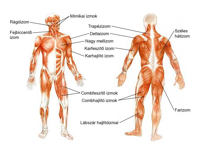 a helminták kezelése az emberi testben ivó lehelete