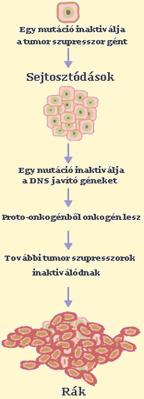 Tumormarkerek   moveinstudio.hu