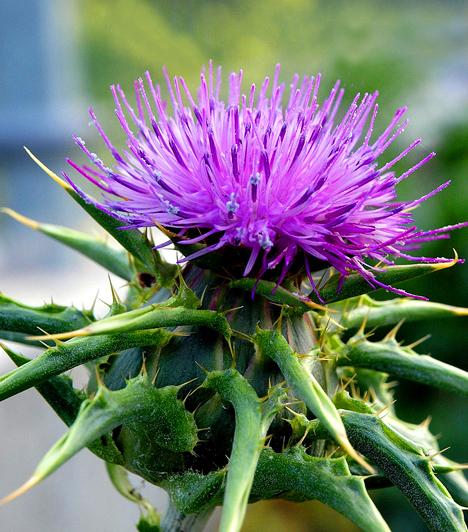 növények a máj méregtelenítésére helmintus és protozoon vizsgálatok