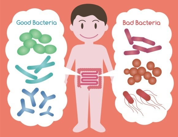 káros baktériumok)